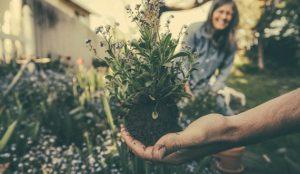 Indoor organic gardening atlanta landscaper